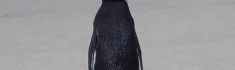 Hra: Tučňáci